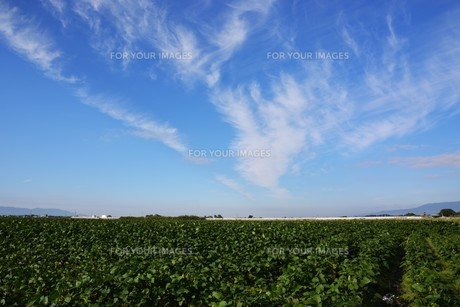 日本の風景 ・ 田園と秋の空の写真素材 [FYI01198185]