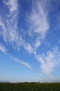 日本の風景 ・ 田園と秋の空の写真素材 [FYI01198186]