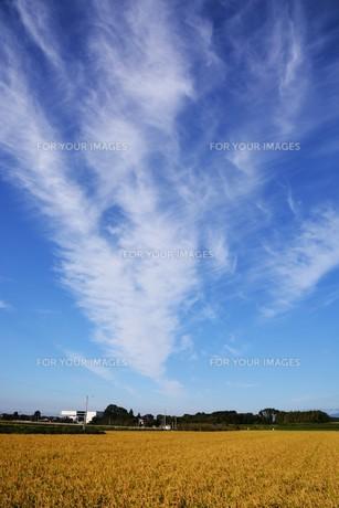 日本の風景 ・ 田園と秋の空の写真素材 [FYI01198188]