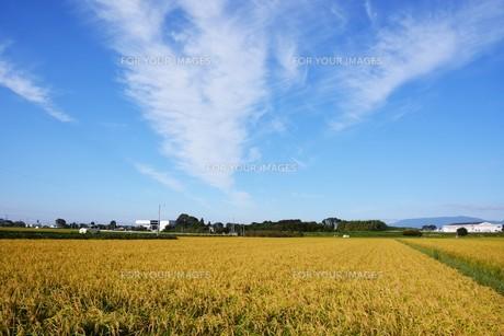 日本の風景 ・ 田園と秋の空の写真素材 [FYI01198189]