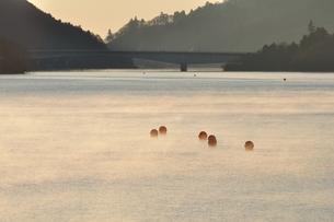 冬の朝 朝霧の湖の写真素材 [FYI01198200]