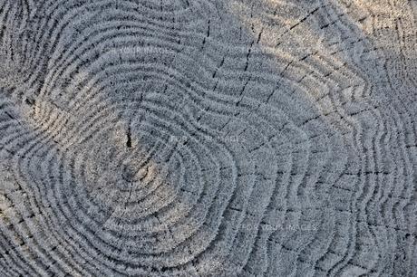 朝霜の年輪の写真素材 [FYI01198205]