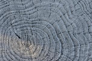 朝霜の年輪の写真素材 [FYI01198206]
