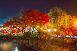紅葉シーズンの京都祇園白川の夜景の写真素材 [FYI01198228]