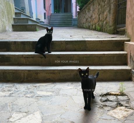 イタリア オルヴィエートの路地で見かけた黒猫の写真素材 [FYI01198240]