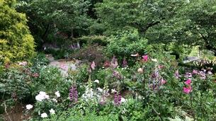 花咲き乱れるの写真素材 [FYI01198369]