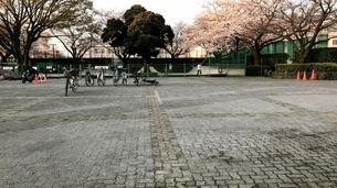 桜咲くの写真素材 [FYI01198480]