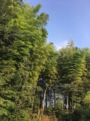 竹林の写真素材 [FYI01198556]