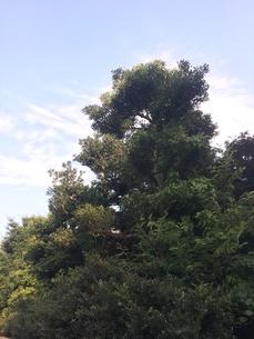 木と空の写真素材 [FYI01198559]