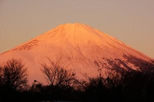 紅富士 ・ 東名足柄SAで12月の早朝7時頃撮影の写真素材 [FYI01198753]