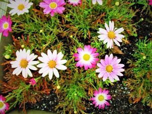 初夏の花達の写真素材 [FYI01198922]