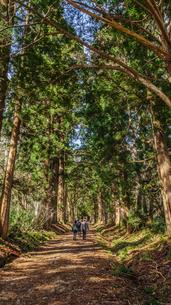 秋の戸隠神社奥社の参道の風景の写真素材 [FYI01199104]
