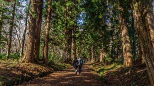 秋の戸隠神社奥社の参道の風景の写真素材 [FYI01199105]