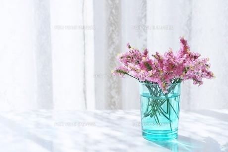 朝の日差しと花の写真素材 [FYI01199114]