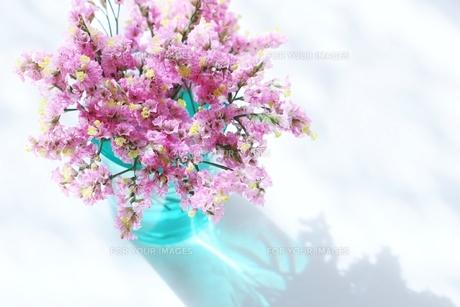 朝の日差しと花の写真素材 [FYI01199115]