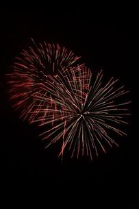 夜空を彩る夏の風物詩 ・ 花火大会の写真素材 [FYI01199315]