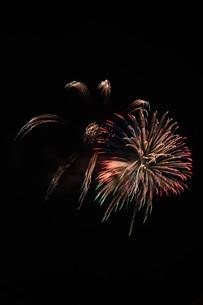 夜空を彩る夏の風物詩 ・ 花火大会の写真素材 [FYI01199337]