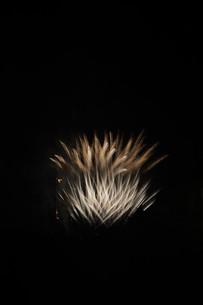 夜空を彩る夏の風物詩 ・ 花火大会の写真素材 [FYI01199350]