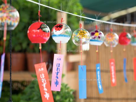 浅草 ほおずき市の写真素材 [FYI01199457]