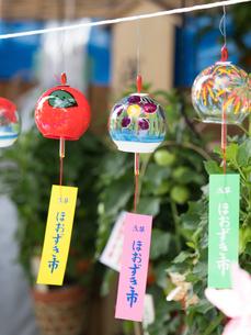 浅草 ほおずき市の写真素材 [FYI01199462]