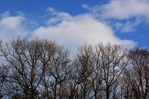 冬晴れの日・背景素材の写真素材 [FYI01199525]