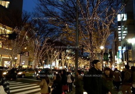 12月の表参道の写真素材 [FYI01199535]