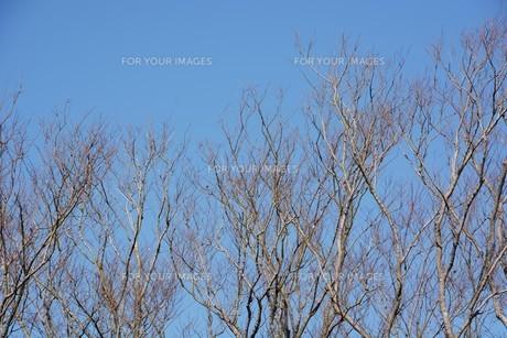 冬晴れの日・背景素材の写真素材 [FYI01199536]