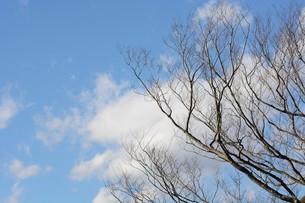 冬晴れの日・背景素材の写真素材 [FYI01199537]