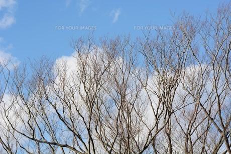 冬晴れの日・背景素材の写真素材 [FYI01199538]