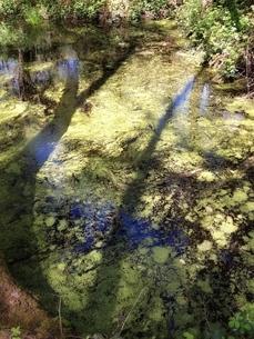 バーミンガム南の森林に密かに佇む沼の写真素材 [FYI01199684]