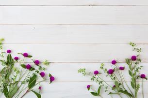 wild beautiful flowers on white backgroundの写真素材 [FYI01199810]