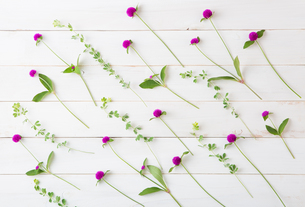 wild beautiful flowers on white backgroundの写真素材 [FYI01199811]