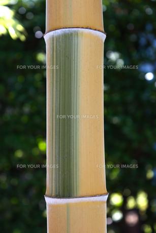 竹 クローズアップの写真素材 [FYI01199819]