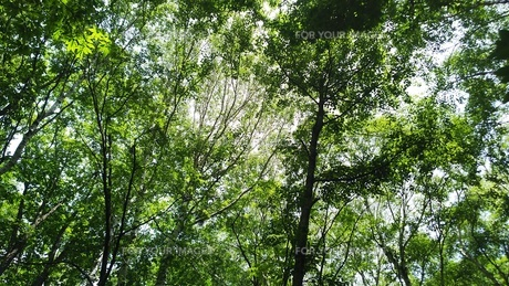 森の写真素材 [FYI01199969]