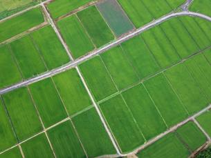 上空から見た田んぼの写真素材 [FYI01199978]