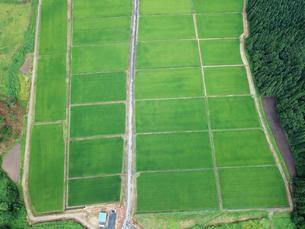 上空から見た田んぼの写真素材 [FYI01199979]
