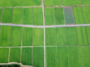 上空から見た田んぼの写真素材 [FYI01199980]
