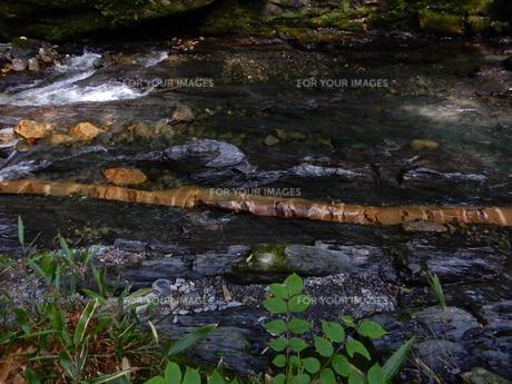 国天然記念物 蛇石(長野県辰野町 横川)の写真素材 [FYI01199995]