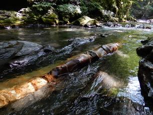 国天然記念物 蛇石(長野県辰野町 横川)の写真素材 [FYI01199997]