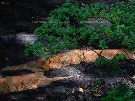 国天然記念物 蛇石(長野県辰野町 横川)の写真素材 [FYI01199999]