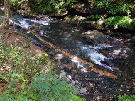 国天然記念物 蛇石(長野県辰野町 横川)の写真素材 [FYI01200000]