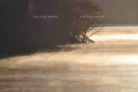 川霧の朝の写真素材 [FYI01200047]