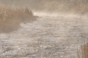 川霧の写真素材 [FYI01200052]