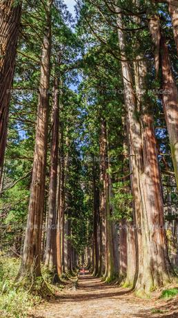秋の戸隠神社奥社の参道の風景の写真素材 [FYI01200318]