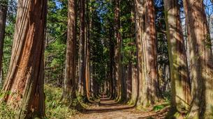 秋の戸隠神社奥社の参道の風景の写真素材 [FYI01200319]