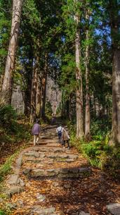 秋の戸隠神社奥社の参道の風景の写真素材 [FYI01200320]