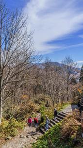 秋の戸隠神社奥社の参道の風景の写真素材 [FYI01200322]