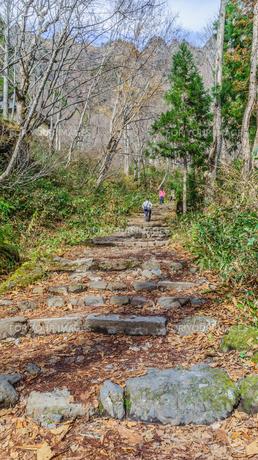 秋の戸隠神社奥社の参道の風景の写真素材 [FYI01200323]