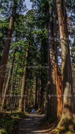 秋の戸隠神社奥社の参道の風景の写真素材 [FYI01200339]