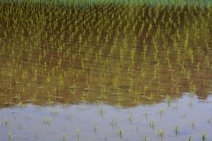 日本の風景 稲田 ・ どこからか聞こえ来る田植え唄 早苗月の写真素材 [FYI01200480]